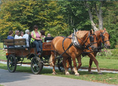 Photograph - Horses and Cart